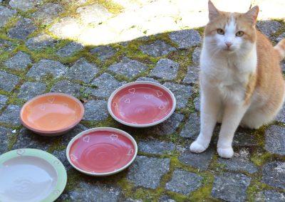 Katzenschälchen